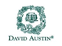 david logo